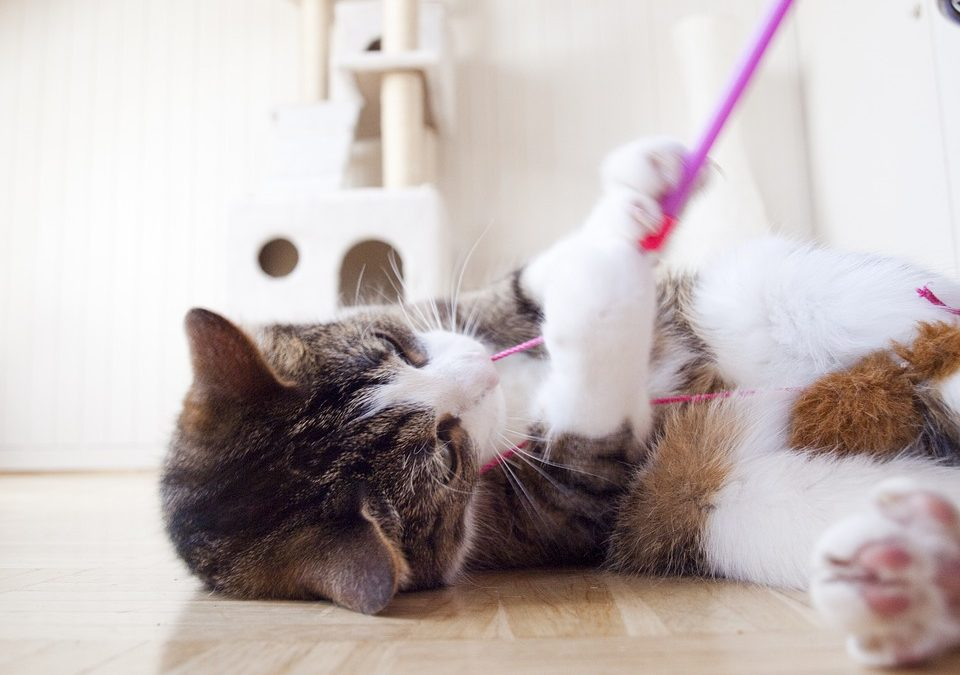 Kattengedrag uitgelegd