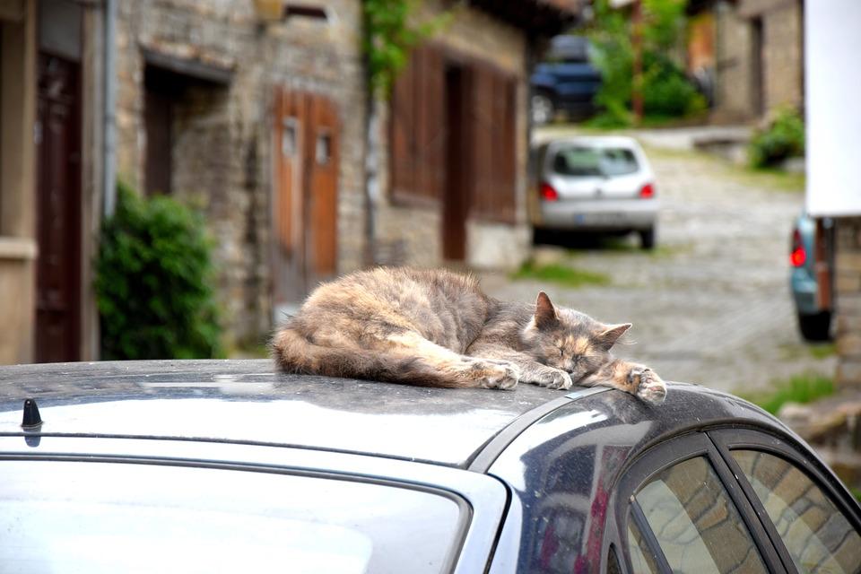 Je kat meenemen in de auto? Zo doe je dat het best!