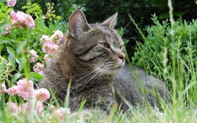 Kijk uit! Giftige planten voor je kat