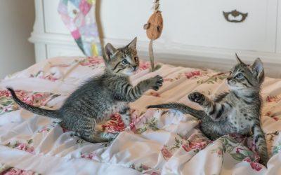 Katten kun je er beter twee in huis nemen dan een?