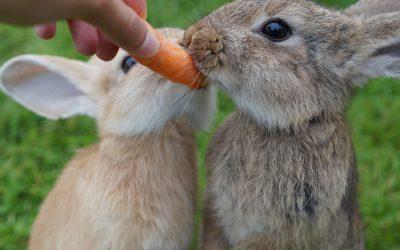 13 absolute feiten over konijnen
