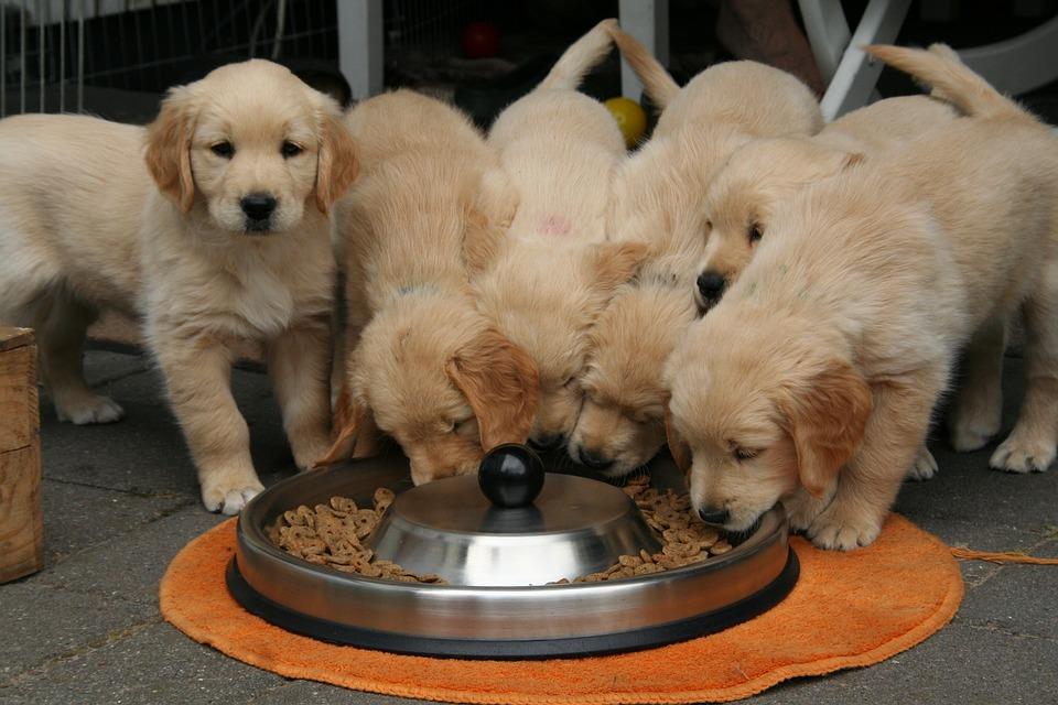 honden eten
