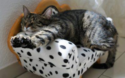 Katten en stress