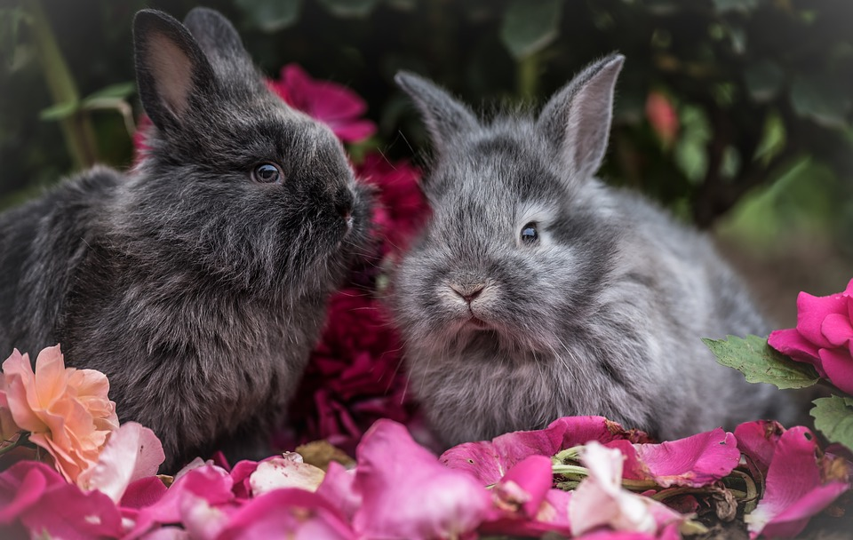konijnen als huisdier