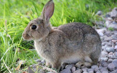 13 feitjes over konijnen