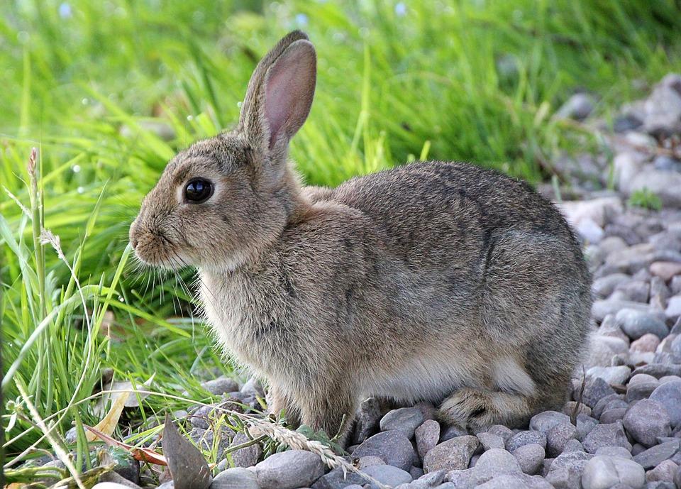13 konijnenfeitjes