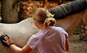 paarden borstellen