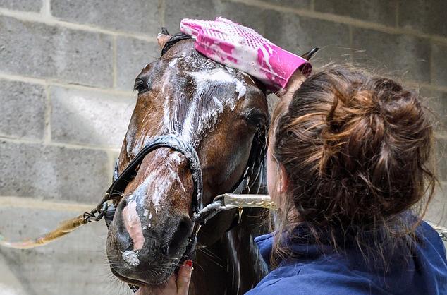 paarden wassen